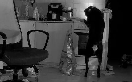Пес хазяйнував на кухні і увімкнув плиту: наслідки зафіксувала камера спостереження