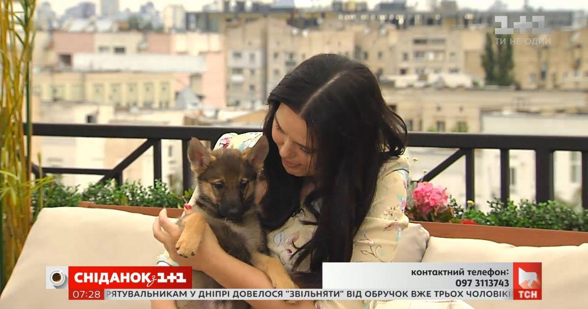 Двое щенков-девочек ищут заботливых хозяев