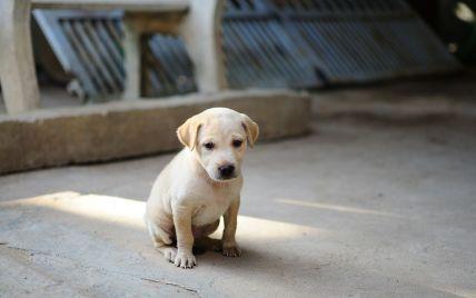 В Черновцах массово отравили собак: полиция расследует коллективное заявление