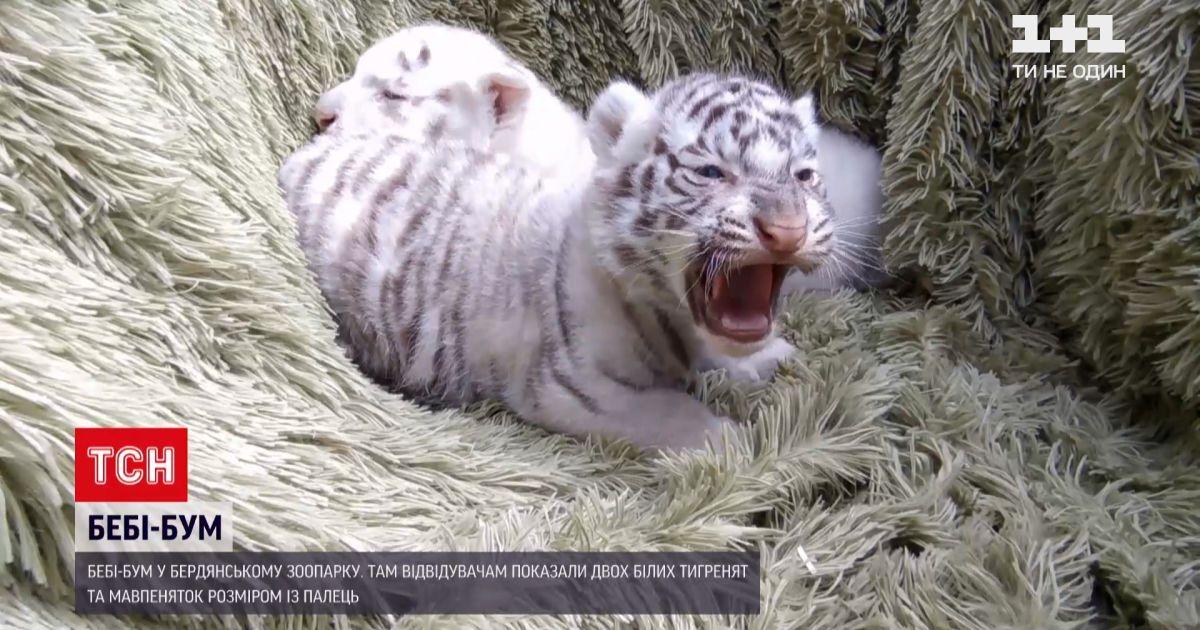 Новости Украины: в Бердянском зоопарке появились на свет два десятка малышей разных зверей