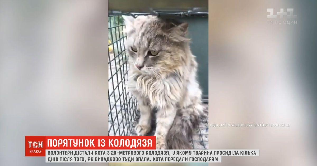 В Харьковской области с заброшенного колодца вытащили кота, который просидел там несколько дней