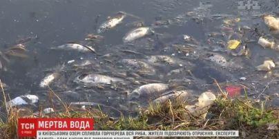 Екологічна надзвичайна подія у Києві: з озера витягли сотні дохлих рибин