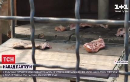 Пантера буквально зняла скальп: постраждалий від нападу хижака під Полтавою не працював в екопарку