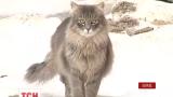 У Харкові нашестя безпритульних котів