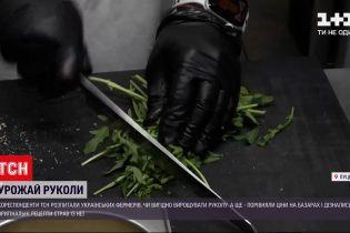 Новини України: рукола з українського городу – скільки коштує і що з неї можна приготувати