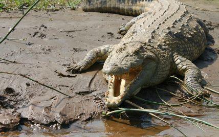 """""""Я не думала, що зможу вибратися живою"""": дівчина пішла купатися вночі і потрапила до пащі крокодила"""