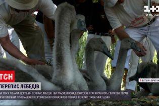 Новости мира: на Темзе начали ежегодную перепись лебедей - этой традиции более 800 лет
