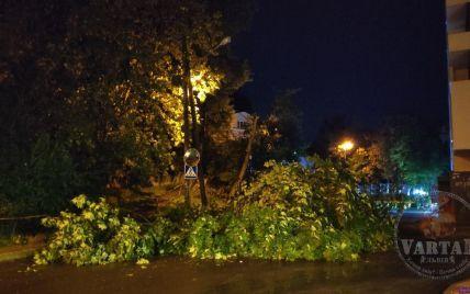 Повалені дерева, пошкоджений МАФ, автомобілі та рекламні щити: у Львові вночі лютував буревій (фото)