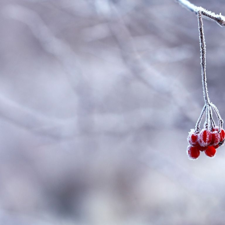 Прогноз погоди на 17 листопада: в Україні буде сніг, місцями ожеледиця, температура - до 6 морозу