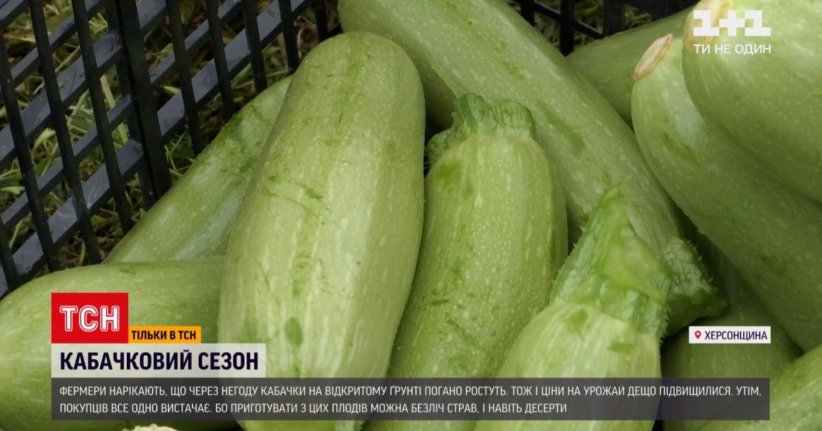 Новини України: початок кабачкового сезону – чому зросли ціни і як на це вплинула погода