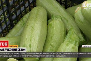 Новости Украины: начало кабачкового сезона - почему выросли цены и как на это повлияла погода