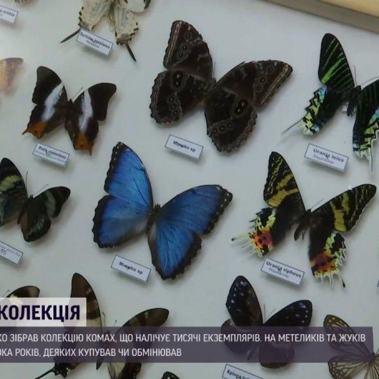 Метелики завбільшки з долоню та міліметрові жуки: тисячі комах зібрав колекціонер на Волині