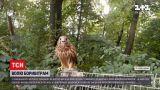 Новости Украины: в Ровенском зоопарке показали, как отпускают в самостоятельную жизнь хищных птиц