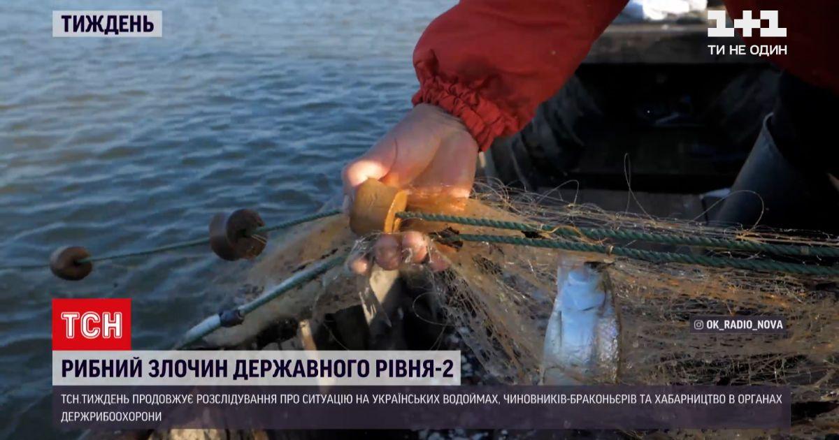 Новини тижня: яких змін зазнала ситуація з незаконним виловом риби на Дністровському лимані
