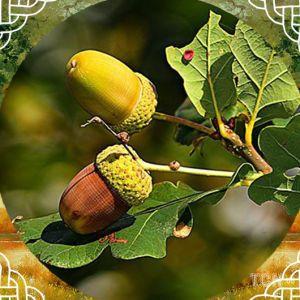 Кельтський календар дерев-2021: місяць дуба