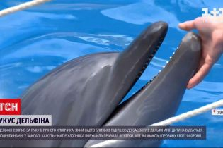 Новини України: в Одесі дельфін вкусив 6-річного хлопчика – чому не можна підходити до цих тварин