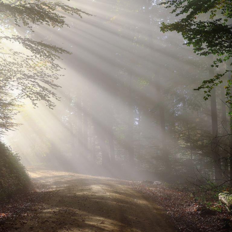 В лесу под Полтавой заблудилась 60-летняя женщина