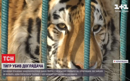 Убитый тигром работник дружил с хищником более трех лет: теперь решается судьба животного