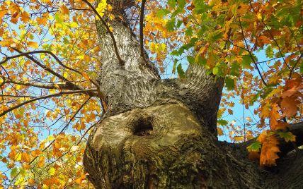 В Івано-Франківській області дерево розчавило чоловіка
