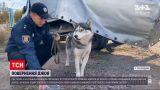 Новости Украины: в Полтавской области полиция вернула домой собаку, которая вместе с владельцем попала в ДТП