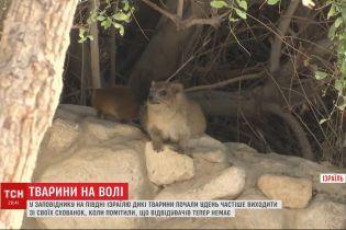 Прогулки в израильском заповеднике: животные вышли из убежищ, так как в парке нет посетителей