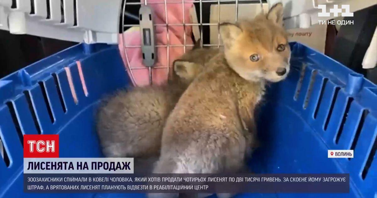Новости Украины: зоозащитники поймали мужчину, который хотел продать четырех лисят