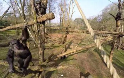 Шимпанзе сбили беспилотник-шпион в нидерландском зоопарке