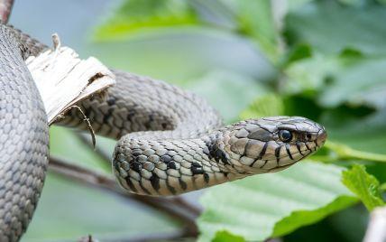 Смертельная схватка: в Индии мужчина загрыз змею, которая его укусила, и умер