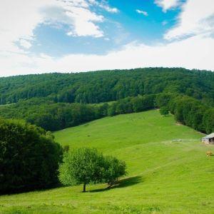Шешори у Карпатах: оздоровча відпустка в оточенні гір і лісів