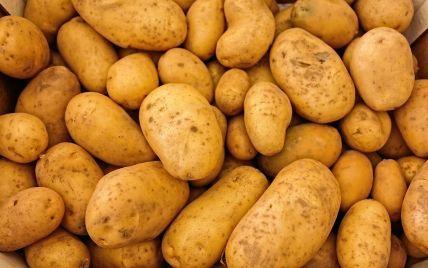 На тлі негоди в Україні дорожчає картопля: які нині ціни