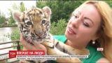 Двухмесячный тигренок Триша наконец-то вишел к посетителям Луцкого зоопарка