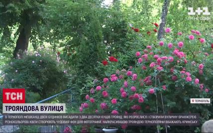 В Тернополе жители одного из ОСМД создали во дворе оранжерею роз