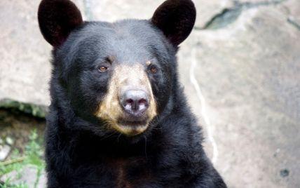 У Канаді ведмідь роздер жінку на очах у її колег