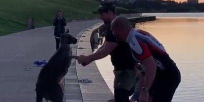 """В Австралії двоє чоловіків врятували кенгуру, який опинився в крижаній пастці: тварина """"подякувала"""" їм (зворушливе відео)"""