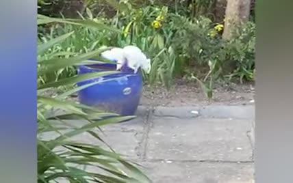 Британка зафільмувала рідкісну білку-альбіноса, яка краде горіхи на подвір'ї