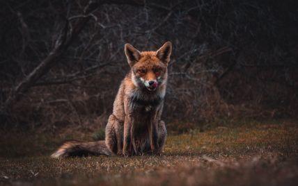Борьба с бешенством: что делать, если вас укусило дикое животное
