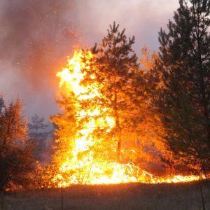 У пожежі в Луганській області загинув військовослужбовець ЗСУ