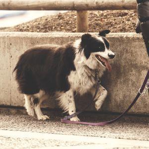 У Німеччині хочуть зобов'язати власників собак вигулювати їх двічі на день