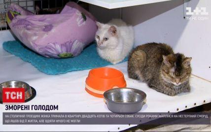 Морила голодом: в Киеве женщина держала в квартире 20 кошек и 4 собак