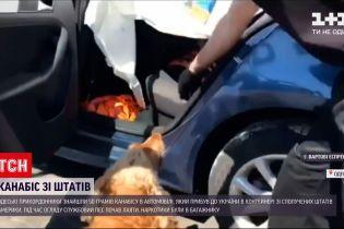 Новости Украины: в Одессе нашли американский каннабис в привезенном авто