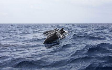 Море покраснело от крови: на Фарерских островах убили более тысячи дельфинов за один день
