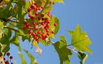 Переважно сонячно та тепло: прогноз погоди в Україні на вівторок, 14 вересня