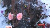 У Запоріжжі невідомі підпалили могилу бійця, який загинув в АТО