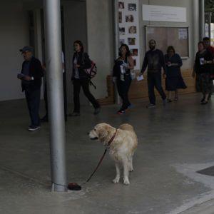 Зоозащитники бьют тревогу: в Украине владельцы собак оставляют их в камерах хранения супермаркетов