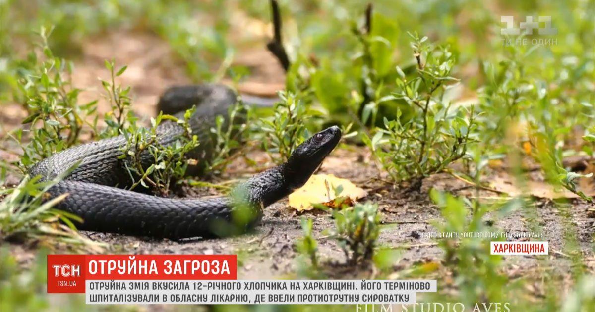 Отруйна змія вкусила 12-річного хлопчика під час відпочинку на березі річки