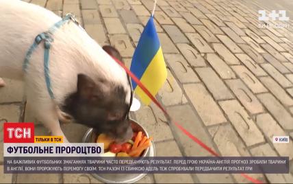 Євро 2020 Україна-Англія: кому навіщувала перемогу свинка Адель