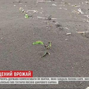 У Тернопільській області пилова буря знищила посіви цукрових буряків: фермери просять про допомогу