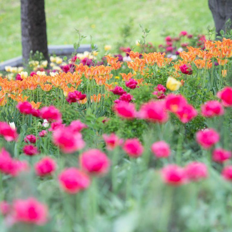 Погода в Україні: у неділю, 16 травня, буде переважно сухо, повітря місцями прогріється до +28°
