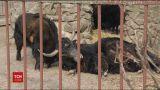 В Киеве презентовали план модернизации главного зоопарка страны