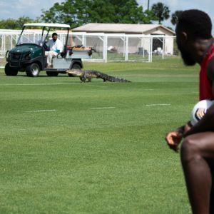 Крокодил устроил переполох, заявившись на тренировку клуба американской MLS (видео)